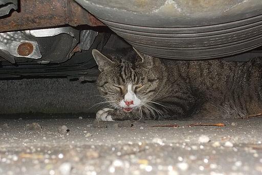 Die Katze schafft es nach zwei Unfällen gerade noch, unter einem parkenden Auto Zuflucht zu suchen.