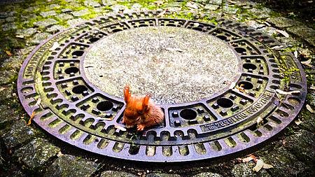 Eichhörnchen Olivio wurde von der aktion tier Tierrettung München befreit.