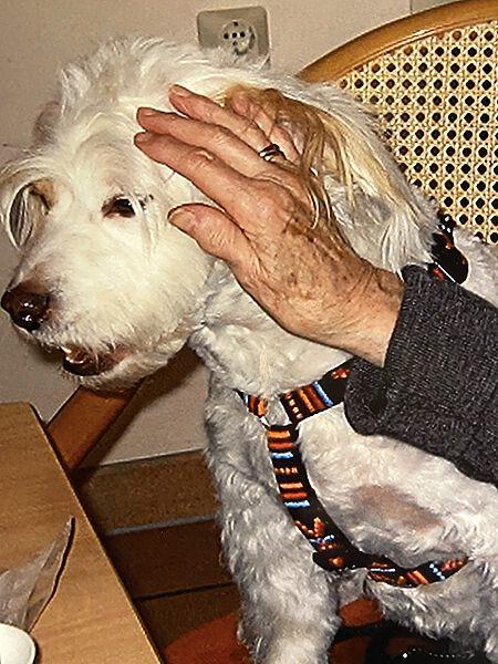 Flocke als Besuchshund im Seniorenheim