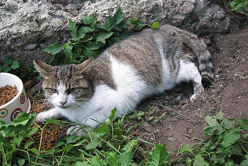 Katze mit zerquetschtem Bein gerettet