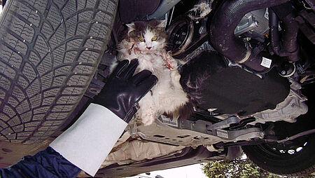 Tierdrama in einer Autowerkstatt