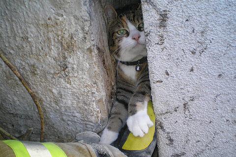 Katze im Mauerspalt