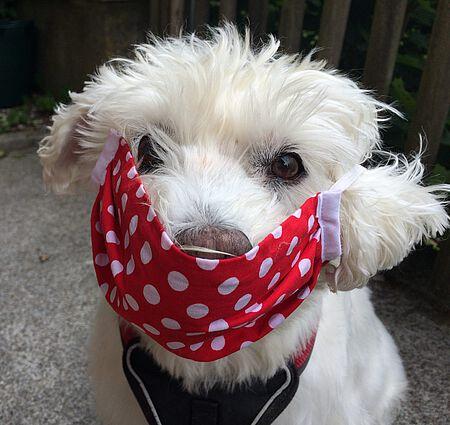 Hund Ronja mit Maske