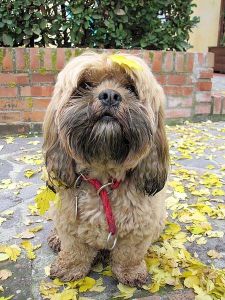Hund Finett