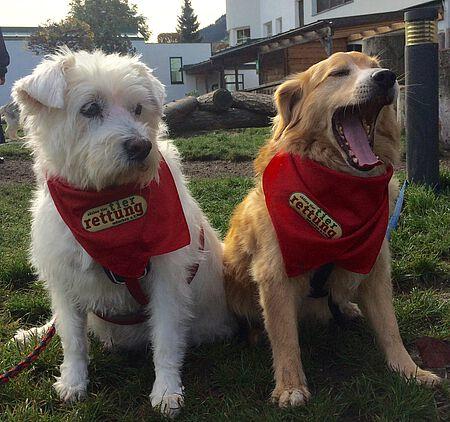 Hunde Ronja & Bela