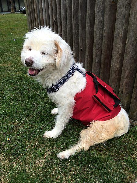 Flocke war auch mit Haltegurt ein glücklicher Hund.