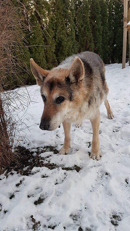 Vermutlich hatte Rex zu viel Schnee aufgenommen, der ihm nicht bekommen ist.