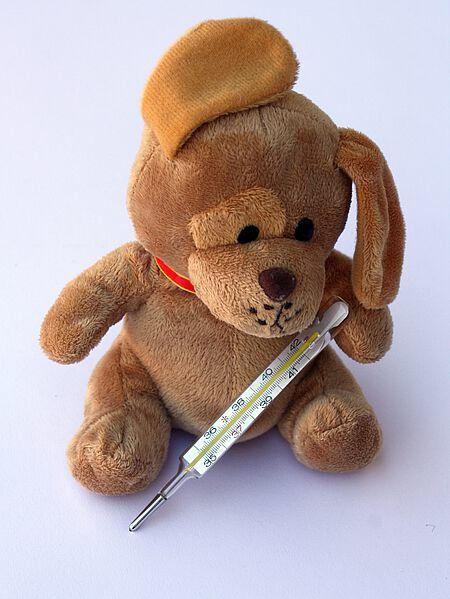Fieber gehört zu den ersten Symptomen einer Staupeerkrankung.
