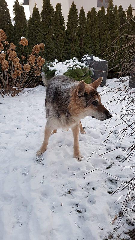 Der Hund Rex ist ohnehin in einem schon betagten Alter, eben ein echter Methusalem.